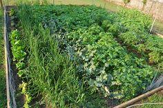 vegetable garden..