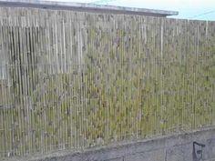 cercos de caña - Buscar con Google Parking Lot, Texture, Wood, Google, Gardens, Grey Hair, Decks, Surface Finish, Woodwind Instrument