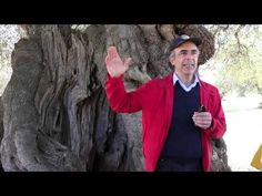Olive trees, two to three thousand years old, still provides the finest quality Olive Oils. Corrado Rodio owner and guide at Masseria Brancati, a typical Pug.
