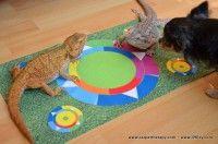 Pet 5, Pet Dogs, Composition, Carpet, Kids Rugs, Cats, Surface, Color, Home Decor