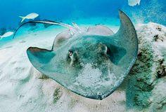 Stingray Cayman www.passengerpicks.com
