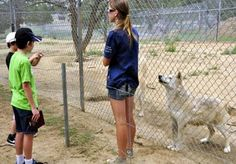 Ramah, New Mexico  Wolf Sanctuary. Volunteer and Give Back to the animals of the world.