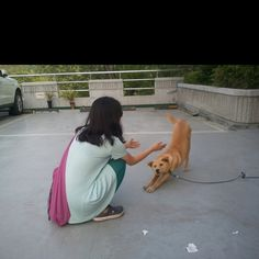 Korean yellow dog 귀여운 누렁이 양수역에서 만나다