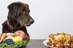 Die Top 20 gesunder Hundeernährung