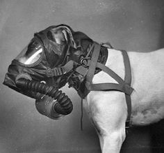 Dog Gas Masks -- I've never seen anything like this before, surreal and creepy, don't ya think?