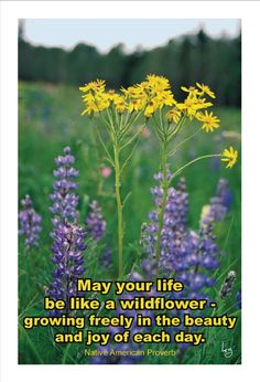 Image result for happy birthday wild flower images
