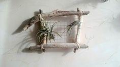 tillandsias ⚓ cadre végétal en bois flotté⚓ décoration mer ⚓ décoration⚓ déco : Décorations murales par lartisane