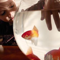 Kid's Wear - Advent Calendar 2014 Gotta Goldfish! photo by Achim Lippoth