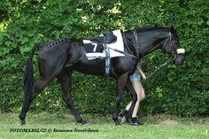 Jan Demele trenér dostihových koní