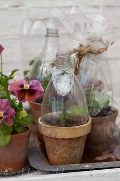 """no green thumb? use """"cut to size"""" plastic bottles to cover your tender seedlings either directly in the garden, or in a pot, or on your sill. if you don't have a green thumb this is a great little greenhouse that works very well. Dream Garden, Garden Art, Garden Plants, Indoor Plants, Indoor Garden, Planter Garden, Herb Garden, Pot Plants, Planter Pots"""
