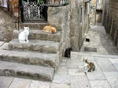 Cats from Dubrovnik, Croatia