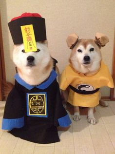 Pin By Ying On Shiba Love Pinterest - Three shiba inus stick their heads through wall to greet passers by