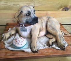 Pinner Wrote Learn how Sharon Perrins made this incredible staffie dog cake with this step by step guide from Cake Life. Bird Cakes, Dog Cakes, Cupcake Birthday Cake, Cupcake Cakes, Cupcakes, Fondant Animals, Fondant Dog, Fondant Cakes, Fondant Flower Cake