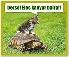 Animals And Pets, Funny Animals, Cute Animals, Gamer Cat, Cute Friends, Cats And Kittens, Funny Cats, Turtle, Have Fun