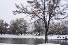 It Snowed In March... So I Took A Walk Around The Pond.  As the wind blow and the snow fell you could feel the coldness in the air. Yet, it was a beautiful time to take a walk around the pond and appreciate my surroundings.  This view of the pond was captured on #lexarmemory using my #Lensbaby #Edge80 lens.