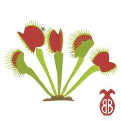New sticker design! The carnivorous Venus Flytrap Dionaea muscipula. Check them out at http://ift.tt/1q5Muw3  #science #nature #sciart #botany #biology #carnivorousplant #venusflytrap #dionaeamuscipula #redbubble by brilliantbotany