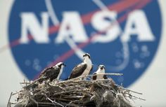 Bird lovers, space buffs square off over proposed Florida launch pad
