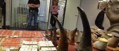 Cuernos de #rinocerontes incautados