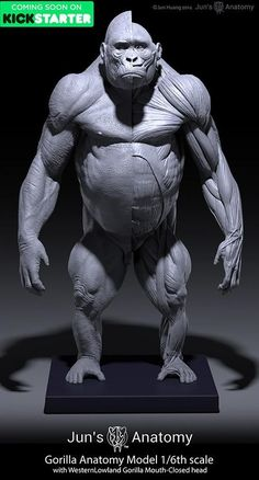 Gorilla Anatomy model 1/6th scale v.1
