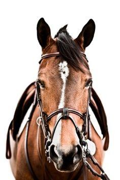 Source Carol Brooks Parker … Source Carol Brooks Parker - Art Of Equitation Cute Horses, Pretty Horses, Horse Love, Beautiful Horses, Animals Beautiful, Horse Photos, Horse Pictures, Hunter Jumper, Horse Girl