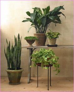 Tall House Plants Low Light resemblance of tall house plants for indoor: the most recommended