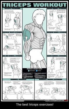 1000 images about tricep exercises on pinterest  weight