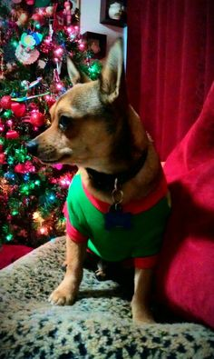 Jaxson wearing his new Elf outfit.