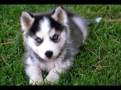 Cute puppy, so adorable!
