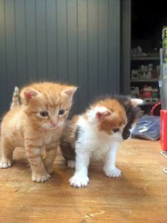 Fiskens hire new fluffly staff members - Last Thursday saw the introduction of two new staff members at Fiskens Saddlery and Feed Shop in Pukekohe. Local News, Kittens Cutest, New Zealand, Thursday, Cats, Shop, Animals, Gatos, Animales