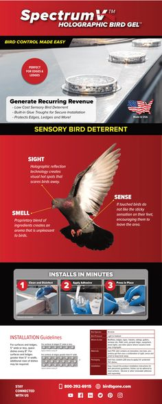 SpectrumV™ Holographic Bird Gel™ by Bird B Gone is an easy, effective, economical bird control solution for pest birds. Keep Birds Away, Protected Species, Migratory Birds, Silicone Adhesive, All Birds, Best Dishes, Bird Species, Holographic, Infographics