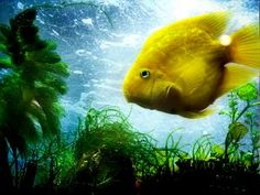 20 Amazing nature photography wallpapers — Shearyadi& World Parrot Fish, Yellow Fish, Plenty Of Fish, Fish Wallpaper, Nature Hd, Beautiful Fish, Sea And Ocean, Tropical Fish, Nature Pictures