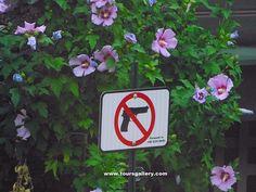 No Guns area of Chicago. Not all Americans are gun crazy. Toursgallery.com