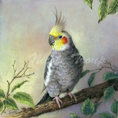 Cockatiel Canvas Print / Canvas Art by Nicole Troup Bird Painting Acrylic, Watercolor Bird, Watercolor Paintings, Australian Birds, Bird Drawings, Cockatiel, Wildlife Art, Animal Paintings, Bird Art