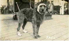 Rear Admiral Evan-Thomas' beloved Jack. Wounded at Jutland on HMS Barham. See the new section on Jutland1916.com
