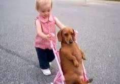 Cute toddler takes her Doxie for a walk.   http://www.dogheirs.com/misst/posts/846-toddler-takes-dachshund-for-walk