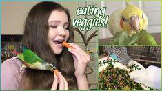 Cockatiel, Budgies, Parrots, Eat Healthy, Birds, Bird Cage, Vegetables, Pets, Sassy