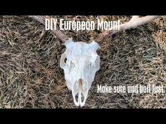 How to do a European Skull Mount - YouTube