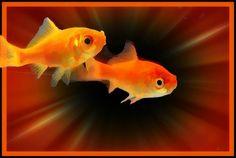 #fish  #nature  #pets #cartoonizer