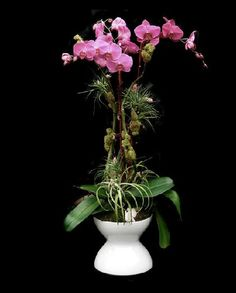 Orchid arrangement by Paloma Teppa