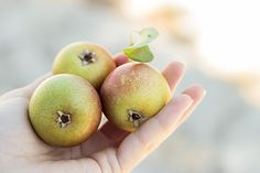 pears from tartamour.com
