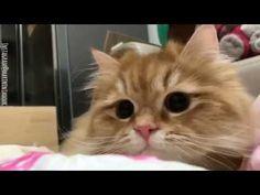 OMG so adorable