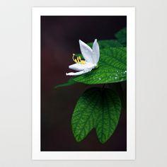drop that flower Art Print by nandagopal rajan - $17.68