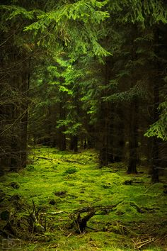 Dark Forest, Germany photo by patrick
