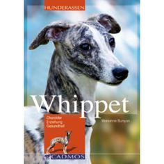 Whippet - Hunde