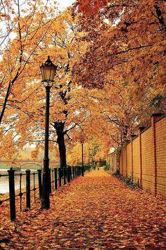 Natur ist erstaunlich. die Blätter sind sehr orange. ein foto dessen berlin.