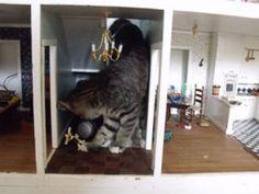 Photo of Cat Destroying Dollhouse Goes Viral on Reddit, Imgur - Yahoo