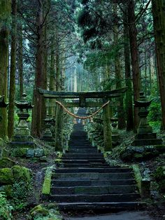 Forest Japan 💖 uploaded by Quartz💫🌙 on We Heart It Japanese Shrine, Japanese Temple, Aesthetic Japan, Japanese Aesthetic, Japan Nature, Slytherin Aesthetic, Japanese Architecture, Fantasy Landscape, Japanese Culture