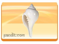 """ The Conch "" by Pandit Rahul Kaushal  --------------------------------------------------------- The conch is considered to be suitable symbol to energize travel luck.It is especially effective for people who deal in overseas business and travel abroad. The shell is one of the eight auspicious symbols found on the foot of the Buddha. http://www.pandit.com/the-conch/"