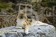 The Cat Is Lying On The Ruins - Download From Over 58 Million High Quality Stock Photos, Images, Vectors. Sign up for FREE today. Image: 31770605