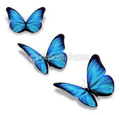tres mariposas azules, aisladas en blanco — Imagen de stock #17420759